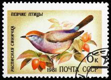 White-browed Tit-warbler (Leptopoecile sophiae), Song Birds serie, circa 1981. MOSCOW, RUSSIA - MAY 25, 2019: Postage stamp printed in Soviet Union (Russia) stock photography
