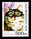 Turkish Angora (Felis silvestris catus), Domestic Cats serie, ci. MOSCOW, RUSSIA - NOVEMBER 26, 2017: A stamp printed in Azerbaijan shows Turkish Angora (Felis Royalty Free Stock Image