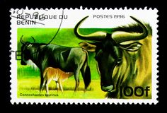 Blue Wildebeest (Connochartes taurinus), Ungulates serie, circa. MOSCOW, RUSSIA - NOVEMBER 26, 2017: A stamp printed in Benin shows Blue Wildebeest &# stock images