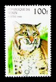 Bobcat (Lynx rufus), Wild Cats serie, circa 1996. MOSCOW, RUSSIA - NOVEMBER 25, 2017: A stamp printed in Benin shows Bobcat (Lynx rufus), Wild Cats serie, circa Stock Photo