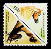 Horses (Equus ferus caballus), serie, circa 1997. MOSCOW, RUSSIA - NOVEMBER 26, 2017: A stamp printed in Benin shows Horses (Equus ferus caballus Stock Photography