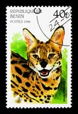 Serval (Leptailurus serval), Big Cats serie, circa 1996. MOSCOW, RUSSIA - NOVEMBER 26, 2017: A stamp printed in Benin shows Serval (Leptailurus stock photo