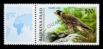 Peregrine Falcon (Falco peregrinus), Birds serie, circa 1996. MOSCOW, RUSSIA - NOVEMBER 26, 2017: A stamp printed in Burkina Faso shows Peregrine Royalty Free Stock Photos