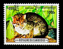 Flat-headed Cat Prionailurus planiceps, Wild Cats serie, circa 1996. MOSCOW, RUSSIA - NOVEMBER 24, 2017: A stamp printed in Cambodia shows Flat-headed Cat Stock Photos