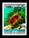 Gaping File-shell Lima hians, Molluscs serie, circa 1999. MOSCOW, RUSSIA - NOVEMBER 24, 2017: A stamp printed in Cambodia shows Gaping File-shell Lima hians Stock Photography