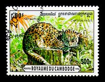 Geoffroy`s Cat Oncifelis geoffroyi, Wild Cats serie, circa 1996. MOSCOW, RUSSIA - NOVEMBER 24, 2017: A stamp printed in Cambodia shows Geoffroy`s Cat Oncifelis Stock Image