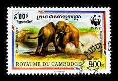 Malaysian Elephant Elephas maximus hirsutus, WWF - Malaya Elephant serie, circa 1997. MOSCOW, RUSSIA - NOVEMBER 24, 2017: A stamp printed in Cambodia shows Royalty Free Stock Photos