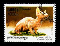 Sphinx Felis silvestris catus, Domestic Cats serie, circa 1998. MOSCOW, RUSSIA - NOVEMBER 24, 2017: A stamp printed in Cambodia shows Sphinx Felis silvestris Stock Images