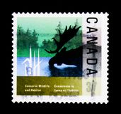 MOSCOW, RUSSIA - NOVEMBER 24, 2017: A stamp printed in Canada sh. Ows Moose, Wildlife and Habitat Conservation serie, circa 1988 Royalty Free Stock Image