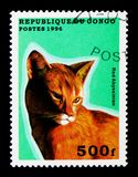 Red Abyssinian (Felis silvestris catus), Domestic cats serie, ci. MOSCOW, RUSSIA - NOVEMBER 26, 2017: A stamp printed in Congo shows Red Abyssinian (Felis Royalty Free Stock Photos