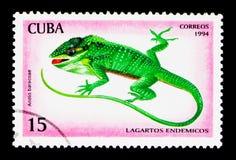 Baracoa Anole Anolis baracoae, Reptiles serie, circa 1994. MOSCOW, RUSSIA - NOVEMBER 25, 2017: A stamp printed in Cuba shows Baracoa Anole Anolis baracoae Stock Photography