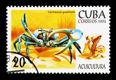 Blue Land Crab (Cardisoma guanhumi), Aquaculture serie, circa 19. MOSCOW, RUSSIA - NOVEMBER 25, 2017: A stamp printed in Cuba shows Blue Land Crab &# Royalty Free Stock Photography