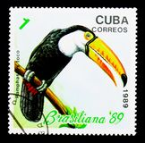 Common Toucan (Ramphastos toco), Philatelic exhibition Brasilian. MOSCOW, RUSSIA - NOVEMBER 25, 2017: A stamp printed in Cuba shows Common Toucan (Ramphastos royalty free stock photography