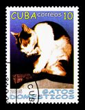 Domestic Cat (Felis silvestris catus) licking its Paw, serie, ci. MOSCOW, RUSSIA - NOVEMBER 25, 2017: A stamp printed in Cuba shows Domestic Cat (Felis Royalty Free Stock Photo