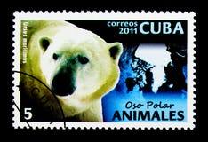 Polar Bear (Ursus maritimus), Fauna serie, circa 2011. MOSCOW, RUSSIA - NOVEMBER 25, 2017: A stamp printed in Cuba shows Polar Bear (Ursus royalty free stock photography