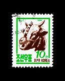 Cattle Bos primigenius taurus, Farm animals serie, circa 1990. MOSCOW, RUSSIA - NOVEMBER 24, 2017: A stamp printed in Democratic People`s republic of Korea shows Royalty Free Stock Image