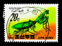 Praying Mantis Mantis religiosa, Insects serie, circa 1990. MOSCOW, RUSSIA - NOVEMBER 24, 2017: A stamp printed in Democratic People`s republic of Korea shows Stock Images