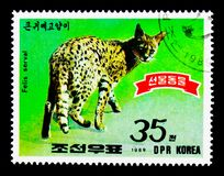 Serval (Leptailurus serval), Animals serie, circa 1989. MOSCOW, RUSSIA - NOVEMBER 25, 2017: A stamp printed in Democratic People's republic of Korea shows royalty free stock image