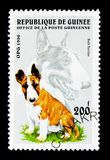 Bull Terrier (Canis lupus familiaris), Dogs serie, circa 1996. MOSCOW, RUSSIA - NOVEMBER 26, 2017: A stamp printed in Guinea shows Bull Terrier ( royalty free stock photography