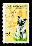 Elkhound (Canis lupus familiaris), Dogs serie, circa 1996. MOSCOW, RUSSIA - NOVEMBER 26, 2017: A stamp printed in Guinea shows Elkhound (Canis royalty free stock image