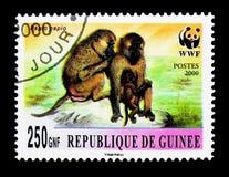 Papio papio, Monkeys, WWF serie, circa 2000. MOSCOW, RUSSIA - NOVEMBER 26, 2017: A stamp printed in Guinea shows Papio papio, Monkeys, WWF serie, circa 2000 Royalty Free Stock Photos