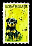 Rottweiler (Canis lupus familiaris), Dogs serie, circa 1996. MOSCOW, RUSSIA - NOVEMBER 26, 2017: A stamp printed in Guinea shows Rottweiler (Canis royalty free stock images