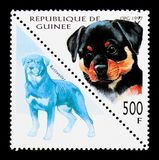Rottweiler (Canis lupus familiaris), Dogs serie, circa 1997. MOSCOW, RUSSIA - NOVEMBER 26, 2017: A stamp printed in Guinea shows Rottweiler (Canis royalty free stock photo