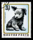 Dog (Canis lupus familiaris), Young Animals serie, circa 1974. MOSCOW, RUSSIA - NOVEMBER 25, 2017: A stamp printed in Hungary shows Dog (Canis stock image