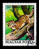 Wildcat (Felis silvestris), Animals serie, circa 1979. MOSCOW, RUSSIA - NOVEMBER 26, 2017: A stamp printed in Hungary shows Wildcat (Felis silvestris), Animals Royalty Free Stock Images