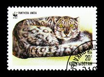 Lying curled-up Snow Leopard (Panthera uncia), WWF serie, circa. MOSCOW, RUSSIA - NOVEMBER 26, 2017: A stamp printed in Kyrgyzstan shows Lying curled Stock Photo