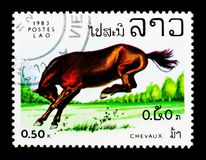 Horse Chevaux (Equus ferus caballus), Horses serie, circa 1983. MOSCOW, RUSSIA - NOVEMBER 26, 2017: A stamp printed in Lao People's Democratic Stock Photo