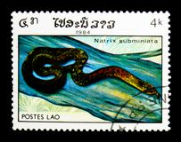 Red-necked Keelback (Rhabdophis subminiatus), Reptiles serie, ci. MOSCOW, RUSSIA - NOVEMBER 25, 2017: A stamp printed in Lao People's Democratic Republic shows Royalty Free Stock Images