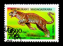 Snow Leopard (Panthera uncia), Fauna serie, circa 1994. MOSCOW, RUSSIA - NOVEMBER 25, 2017: A stamp printed in Madagascar shows Snow Leopard &#x28 Stock Image