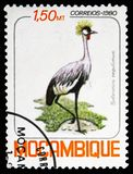 Grey Crowned Crane (Balearica regulorum), Birds serie, circa 1980. MOSCOW, RUSSIA - NOVEMBER 10, 2018: A stamp printed in Mozambique shows Grey Crowned Crane ( stock photo
