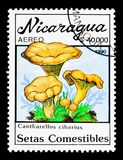 Cantharellus cibarius, Mushrooms serie, circa 1990. MOSCOW, RUSSIA - NOVEMBER 25, 2017: A stamp printed in Nicaragua shows Cantharellus cibarius, Mushrooms serie Stock Photos