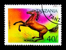 Nonius (Equus ferus caballus), Horses serie, circa 1993. MOSCOW, RUSSIA - NOVEMBER 25, 2017: A stamp printed in Tanzania shows Nonius (Equus ferus Stock Photography