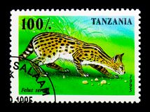 Serval (Leptailurus serval), African predators serie, circa 1995. MOSCOW, RUSSIA - NOVEMBER 25, 2017: A stamp printed in Tanzania shows Serval ( stock images