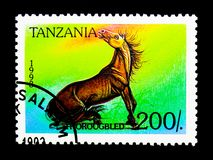 Thorougbred (Equus ferus caballus), serie, circa 1998. MOSCOW, RUSSIA - NOVEMBER 25, 2017: A stamp printed in Tanzania shows Thorougbred (Equus Stock Photo
