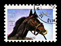 Horse (Equus ferus caballus), Animals; large format serie, circa 1972. MOSCOW, RUSSIA - NOVEMBER 10, 2018: A stamp printed in Umm Al Quwain shows Horse (Equus stock photo