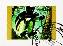 Mantled Guereza (Colobus guereza), Rare animals; small format serie, circa 1972. MOSCOW, RUSSIA - NOVEMBER 10, 2018: A stamp printed in Umm Al Quwain shows stock photography