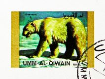 Polar Bear (Ursus maritimus), Rare animals; small format serie, circa 1972. MOSCOW, RUSSIA - NOVEMBER 10, 2018: A stamp printed in Umm Al Quwain shows Polar Bear stock photography