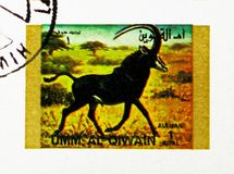Sable Antelope (Hippotragus niger), Rare animals; small format serie, circa 1972. MOSCOW, RUSSIA - NOVEMBER 10, 2018: A stamp printed in Umm Al Quwain shows stock photo
