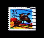 Common Pheasant (Phasianus colchicus), 1987-1988 Regular Issue,. MOSCOW, RUSSIA - NOVEMBER 24, 2017: A stamp printed in USA shows Common Pheasant (Phasianus Stock Photo