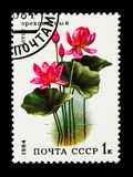 Lotus (Nelumbo nucifera), Aquatic Flowers serie, circa 1984. MOSCOW, RUSSIA - NOVEMBER 26, 2017: A stamp printed in USSR (Russia) shows Lotus Stock Images