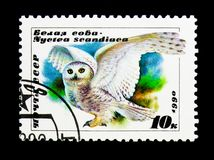 Snowy Owl (Bubo scandiacus), serie, circa 1990. MOSCOW, RUSSIA - NOVEMBER 26, 2017: A stamp printed in USSR (Russia) shows Snowy Owl &#x28 royalty free stock images