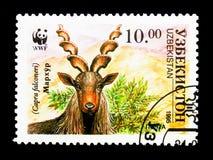 Markhor (Capra falconeri), WWF, The Makhor serie, circa 1995. MOSCOW, RUSSIA - NOVEMBER 26, 2017: A stamp printed in Uzbekistan shows Markhor &#x28 Stock Images