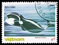 Sei Whale (Balaenoptera borealis), Whales serie, circa 1985. MOSCOW, RUSSIA - NOVEMBER 10, 2018: A stamp printed in Vietnam shows Sei Whale (Balaenoptera royalty free stock photos
