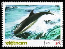 Short-Beaked Common Dolphin (Delphinus delphis), Whales serie, circa 1985. MOSCOW, RUSSIA - NOVEMBER 10, 2018: A stamp printed in Vietnam shows Short-Beaked stock images