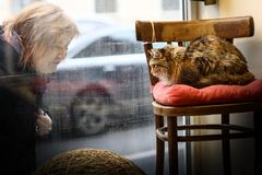 Moscow, Russia, November 1, 2018: Unidentified woman look through the shop window of cat caffe - special place for cat lovers royalty free stock photos