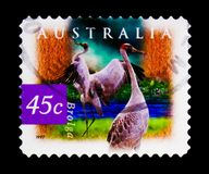 Brolga Grus rubicunda, Flora and Fauna serie, circa 1997. MOSCOW, RUSSIA - OCTOBER 3, 2017: A stamp printed in Australia shows Brolga Grus rubicunda, Flora and Royalty Free Stock Photo